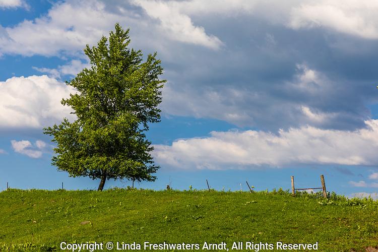 Lone tree in a farmer's field in northern Wisconsin.