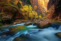 The North Fork of the Virgin River cuts through a deep sandstone canyon, complemented by golden light and colorful fall foliage.