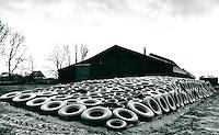 Bauernhaus in der Wedeler Marsch, Schleswig-Holstein, Deutschland 1978