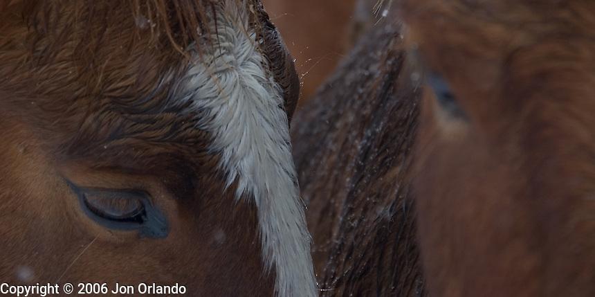 Horses during a blizzard outside Boulder, Colorado<br />
