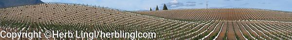 Kelseyville Vineyard, Lake County, California