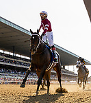 June 5, 2021: Silver State, #3, ridden by jockey Ricardo Santana, wins the Hill 'N' Dale Metropolitan Win and You're In Handicap on Belmont Stakes Day at the Belmont Stakes Festival at Belmont Park in Elmont, New York. Alex Evers/Eclipse Sportswire/CSM