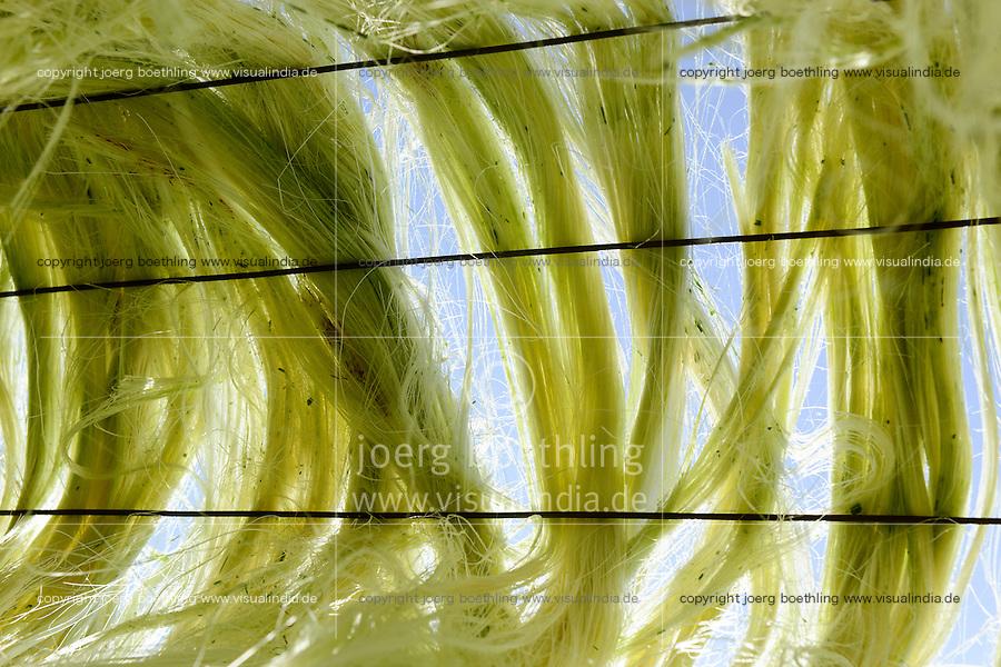 TANZANIA Tanga, Usambara Mountains, Sisal farming and industry, D.D. Ruhinda & Company Ltd., Mkumbara Sisal estate, drying of sisal fibre in the sun / TANSANIA Tanga, Sisal Industrie, D.D. Ruhinda & Company Ltd., Mkumbara Sisal estate, Trocknen der Sisalfaser in der Sonne