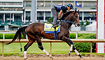 April 28, 2021: Midnight Bourbon, trained by trainer Steve Asmussen, exercises in preparation for the Kentucky Derby at Churchill Downs on April 29, 2021 in Louisville, Kentucky. Scott Serio/Eclipse Sportswire/CSM