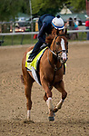 LOUISVILLE, KY - MAY 02: Good Magic gallops in preparation for the Kentucky Derby at Churchill Downs on May 2, 2018 in Louisville, Kentucky. (Photo by Alex Evers/Eclipse Sportswire/Getty Images)