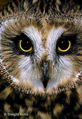OW05-091c   Short-eared Owl - close-up of face -  Asio flammeus.