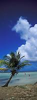 France/DOM/Martinique/Le Vauclin/Pointe Faula: Les fonds blancs, les cocotiers et la plage