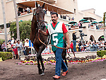 August 15, 2010.Turning Top, in the Paddock before the John C. Mabee Stakes, at Del Mar Thoroghbred Club, Del Mar, CA