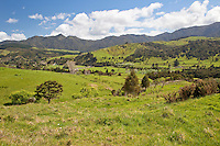 Scenery between Hokianga and Tane Mahuta, north island, New Zealand.