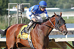 September 1, 2014: Cary Street, Miguel Mena up, wins the grade 3 Greenwood Cup at Parx Racing in Bensalem, PA. A gelding by Smarty Jones, Cary Street is trained by Brendan Walsh and owned by JBL Thoroughbreds LLC and Walsh Racing LLC.  ©Joan Fairman Kanes/ESW/CSM