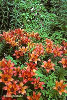 LL04-002a  Flower Garden - Lilies - Rosefire