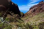 Spanien, Kanarische Inseln, Teneriffa, bei Masca, im Teno Alto Gebirge | Spain, Canary Islands, Tenerife, nwar Masca, at Teno Alto mountains