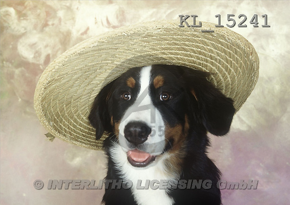 Interlitho, Alberto, ANIMALS, dogs, photos, dog, big hat(KL15241,#A#) Hunde, perros
