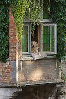 Belgique, Bruges, Chien à la fenêtre, long du canal Groenerei (Canal vert) , on retrouve ce chien dans le film : Bons Baisers de Bruges  // Belgium, Bruges,  Groenerei Canal, (Green Canal)  Dog in the window, along the Groenerei channel (green channel),   this dog is  in the movie In Bruges