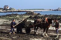 Europe/France/Bretagne/29/Finistère/Brigognan-Plage: Géomoniers et charette de goémon tractée par un cheval sur la plage à marée basse<br /> PHOTO D'ARCHIVES // ARCHIVAL IMAGES<br /> FRANCE 1980