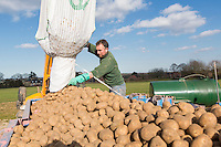 Loading potato planter with seed - Norfolk, March