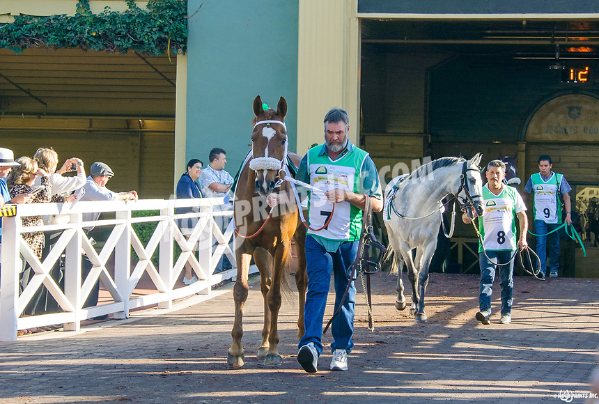 Quick and Rich before The Sheikha Fatima Bint Mubarak Darley Award Stakes (gr 1) at Santa Anita Park in Arcadia CA on 4/1/17