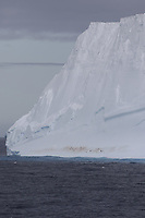 Chinstrap Penguins Pygoscelis antarcticus resting on Iceberg,  Weddel Sea, Southern Ocean, Antarctica