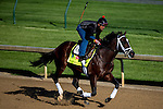 APRIL 28, 2015: Materiality, trained by Todd Pletcher, exercises in preparation for the 141st Kentucky Derby at Churchill Downs in Louisville, Kentucky. Jon Durr/ESW/Cal Sport Media