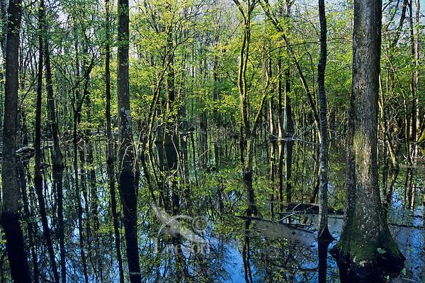 Spring wetlands, Tensas National Wildlife Refuge, Louisiana.  April.
