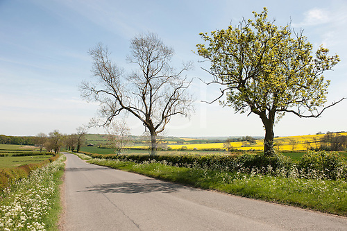 Northamptonshire countryside, England. Road with spring flowers.