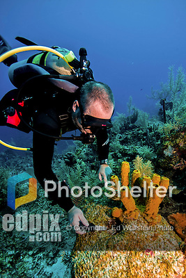 10 June 2014:: Senior SCUBA Instructor at Divetech Steve Tippetts, points out a tiny cleaner shrimp on the reef near Ghost Mountain on the North Shore of Grand Cayman Island. Located in the British West Indies in the Caribbean, the Cayman Islands are renowned for excellent scuba diving, snorkeling, beaches and banking.  Mandatory Credit: Ed Wolfstein Photo *** RAW (NEF) Image File Available ***