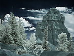 Monolith with Pines, Bryce Canyon (Infrared)