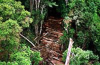 Com uma estrutura de 3 helicópteros e 3 aviões o Ibama, com o apoio do Greenpeace, encontrou grande quantidade de madeira escondida no meio da floresta numa operação, a maior até então na Amazônia, que resultou na apreenção de 9 mil m3 de mogno.<br /> Uruará, Pará , Brasil.<br /> ©Foto: Paulo Santos/Interfoto<br /> 30/10/2001<br /> Negativo Cor