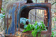 Abandoned car in forest in Franconia, New Hampshire USA during the spring months.