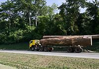 IVORY COAST, deforestation and timber trade to China / ELFENBEINKUESTE, Abholzung fuer neue Kakao, Kautschuk, Palmöl Plantagen und Holzhandel nach China