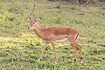 Impala At Lake Bunyonyi Eco Resort
