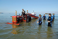 farm tractor pulling an inflatable diving boat onto beach, in Normandy because the sandy beaches and the size and length of the tides, a lot of diving centers use a farm tractor to launch the diving boats. Arromanches City, Normandy; France, North Sea, Europe, Atlantic