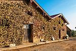 Old Building and equipment on the Mercouri Estate Winery in Katakolon, Pyrgos, Greece