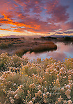 Dawn, Rabbitbrush, Warm Springs, Mono Basin National Forest Scenic Area, Inyo National Forest, California