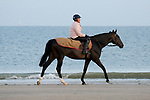 August 16, 2021, Deauville (France) - Racehorse after training at the beach in Deauville. [Copyright (c) Sandra Scherning/Eclipse Sportswire)]