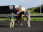 Photo By Michael R. Schmidt.Little Mike wins the 30th running of the Arlington Million Saturday afternoon at Arlington Park.