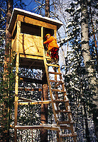 A deer hunter in orange safety hunting gear climbs ladder on a winter hunting blind.