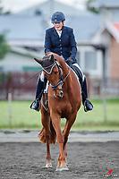 NZL-Ann Webster rides Rustic Challenge. 2020 NZL-AR Dressage & Kiwi Arena Rakes Premier League Show. Wellington Dressage Group. Solway Showgrounds, Masterton. Saturday 31 October 2020. Copyright Photo: Libby Law Photography