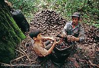 Castañeros, Brazil nut harvesters, gathering Brazil nuts in lowland tropical rainforest, Madre de Dios, Peru.