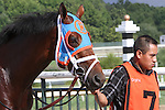 September 1, 2014: Micromanage, trained by Todd Pletcher and owned by Repole Stable, enters the paddock for the grade 3 Greenwood Cup at Parx Racing in Bensalem, PA.  ©Joan Fairman Kanes/ESW/CSM