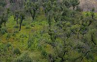 Mishe Mokwa Trail After Rain