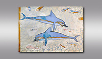 The Minoan 'Dolphin Fresco' wall art from the Queen's Megaron, Knossos Palace, 1600-1450 BC. Heraklion Archaeological Museum.  Grey Background. <br /> <br /> Two dolphins are depicted swimming amongst small fish .