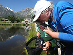 Breast cancer survivor Peggy Limi kisses her catch during a Casting for Recovery retreat in Gardnerville, Nev., on Friday, June 30, 2017. <br /> Photo by Cathleen Allison/Nevada Photo Source