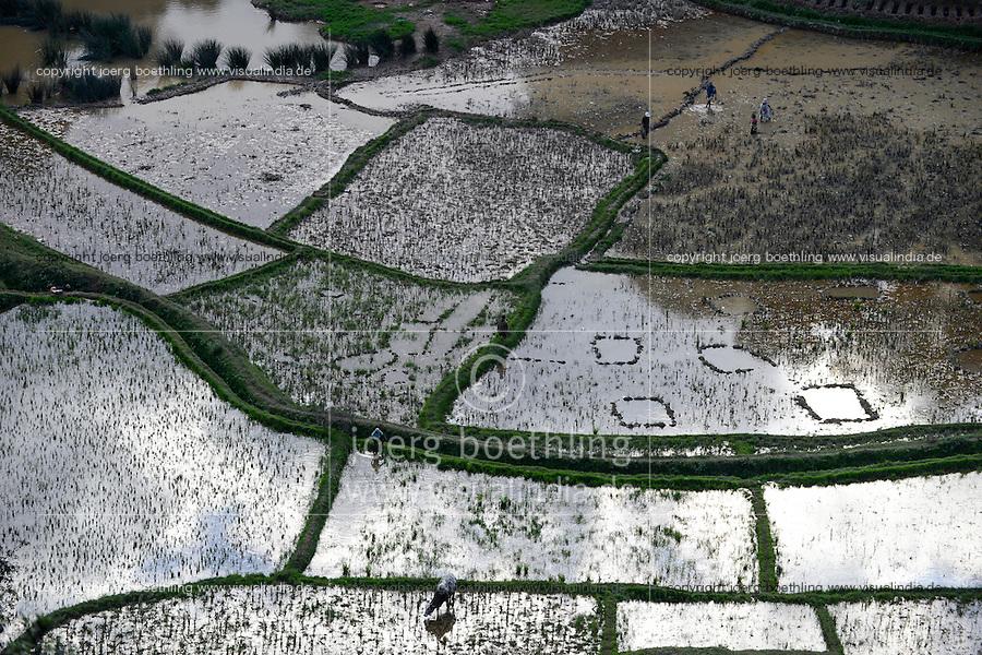 MADAGASCAR, highlands, rice cultivation, rain flooded paddy fields, farmer plant rice / MADAGASKAR, bewaesserte Reisfelder im Hochland bei Ambositra