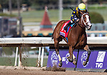 November 2, 2019: Covfefe, ridden by Joel Rosario, wins the Breeders' Cup Filly & Mare Sprint on Breeders' Cup World Championship Friday at Santa Anita Park on November 2, 2019: in Arcadia, California. Carolyn Simancik/Eclipse Sportswire/CSM