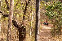 Forest in the Phnom Tnout Phnom Pok Wildlife Sanctuary, in northern Cambodia.