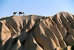 Dromedary Camel, driver and pair of camels on eroded tufa cliffs, Cappadocia, Turkey