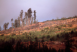 California, clear-cut, Sequoia trees, Northern California Coast Range, Pacific Coast, USA,