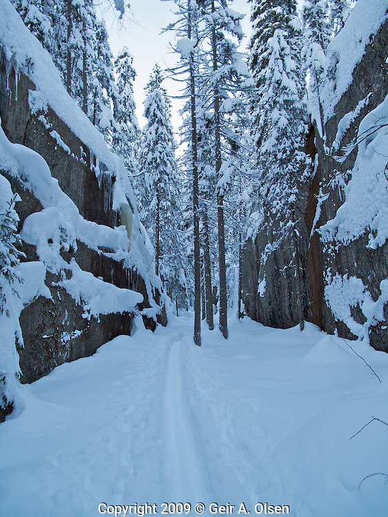 Skiing in the woods outside Oslo, Norway