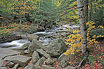 Bear River in the Autumn, Grafton Notch State Park, Maine, USA